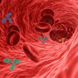 Red blood cells and antibodies